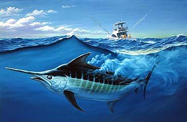 Monster Marlin Wins After 7 Hour Battle Sailing West